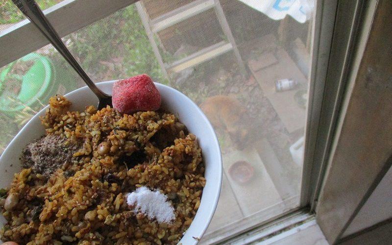 猫と庭と超極貧穀食