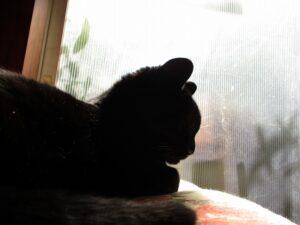 簡単なテレパシー(猫と窓)