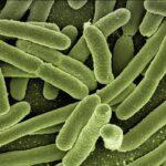 肉に含まれる「Neu5Gc」で肉に含まれる大腸菌への感受性が高まる|栄養学サイトのNutritionFacts.orgを見よう